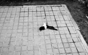 La Maleta de Ulises #9|FotografíadeJosé M. Feito| Compra arte en Flecha.es