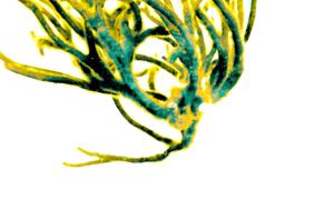 Ímpetu|DigitaldeMarta Caldas| Compra arte en Flecha.es