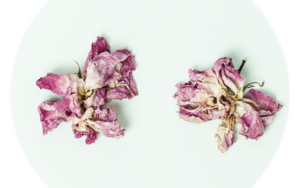 Still (Beauty) 1|DigitaldeMar Agüera| Compra arte en Flecha.es