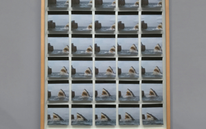 Glitter Shark|CollagedeClara Cebrian| Compra arte en Flecha.es