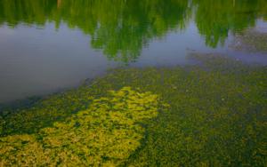 Ecosystem VI|FotografíadeViet Ha Tran| Compra arte en Flecha.es