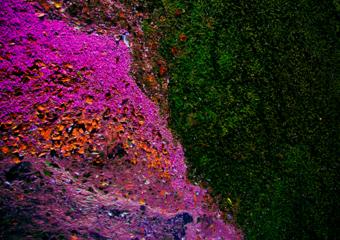 Ecosystem IV|FotografíadeViet Ha Tran| Compra arte en Flecha.es