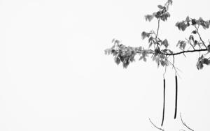 El árbol de Pakse|FotografíadeVerónica Velasco Barthel| Compra arte en Flecha.es