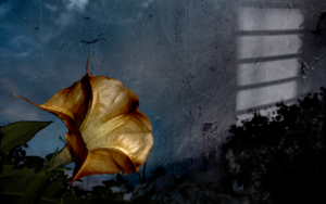 Natures|FotografíadeVíctor Vilamajó| Compra arte en Flecha.es
