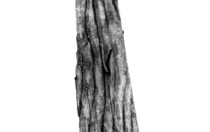 Objet Trouve  (Las Texturas del Mundo)|Digitaldejjuncadella| Compra arte en Flecha.es