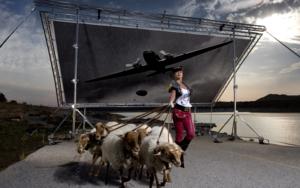 Ejército de ovejas y carneros|FotografíadePeter Müller Peter| Compra arte en Flecha.es
