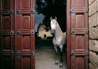 Entrada del Monasterio de la Cartuja|FotografíadePeter Müller Peter| Compra arte en Flecha.es
