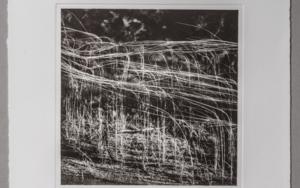 Reeds#4|FotografíadeCarles Mitjà| Compra arte en Flecha.es