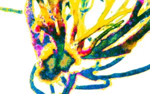 Energía|DigitaldeMarta Caldas| Compra arte en Flecha.es