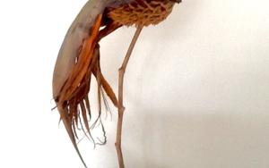Ave del paraiso|EsculturadeDaniel Salorio| Compra arte en Flecha.es