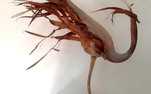Gallo|EsculturadeDaniel Salorio| Compra arte en Flecha.es