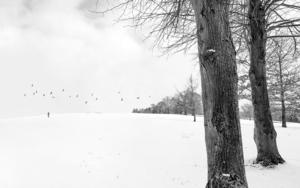 Snowscape  13|FotografíadeAndy Sotiriou| Compra arte en Flecha.es