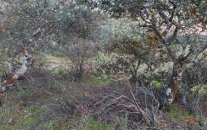 Encina y ramas secas|FotografíadeAngélica Suela de la LLave| Compra arte en Flecha.es