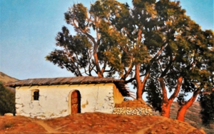 Cabaña y alcornoque|PinturadeFran Jiménez  (Âli Qasim)| Compra arte en Flecha.es