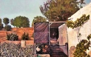Ruralidades|PinturadeFran Jiménez  (Âli Qasim)| Compra arte en Flecha.es