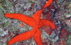 Estrella de los mares|FotografíadeBeatriz García Infante| Compra arte en Flecha.es
