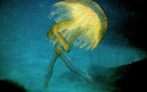 Baila Medusa|FotografíadeBeatriz García Infante| Compra arte en Flecha.es