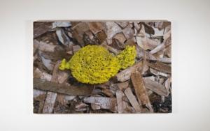 Algues 18|DigitaldeSalvador Llinàs| Compra arte en Flecha.es