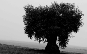 Melancolía 2|FotografíadeAna González| Compra arte en Flecha.es