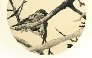 Gorrión entre las ramas|DibujodeEnrique González| Compra arte en Flecha.es