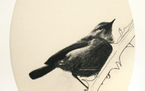 Gorrión ovalado|DibujodeEnrique González| Compra arte en Flecha.es