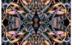 Fragil -1|DigitaldeDaniel Comeche| Compra arte en Flecha.es