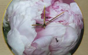 Reloj peonía hormiga|FotografíadeCarmen Varela| Compra arte en Flecha.es