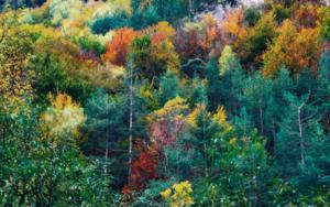 Los Pirineos|FotografíadeYabar| Compra arte en Flecha.es
