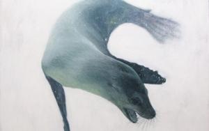 Zalophus Californianus|PinturadeCarlos J. Márquez| Compra arte en Flecha.es