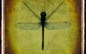 Dragonfly / Libélula FotografíadeAndy Sotiriou  Compra arte en Flecha.es