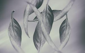 Magnolia|DigitaldeAndy Sotiriou| Compra arte en Flecha.es