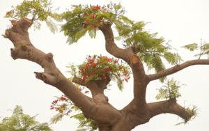 Tree of Joy|DigitaldeKantfish| Compra arte en Flecha.es
