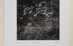 Tree #9|FotografíadeCarles Mitjà| Compra arte en Flecha.es