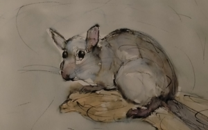 Lirón careto|DibujodeOliverPlehn-Artist| Compra arte en Flecha.es