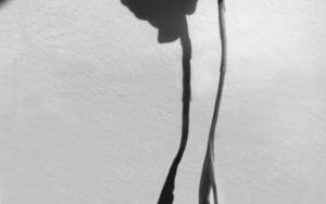 10:00, Inire (serie)|FotografíadePaula González| Compra arte en Flecha.es
