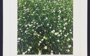 Daisy│acid-free photo paper│printed and produced in the UK│Origin FotografíadeJHIH YU CHEN  Compra arte en Flecha.es