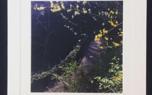 Spring fairy comes│acid-free photo paper│printed and produced in the UK│origin FotografíadeJHIH YU CHEN  Compra arte en Flecha.es