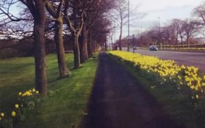 Early spring of daffodils│acid-free photo paper│printed in the UK│Original work|FotografíadeJHIH YU CHEN| Compra arte en Flecha.es