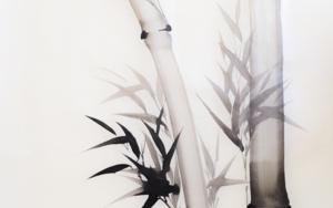 Bambú Nº 3 DibujodeLuciana Rago Ferrón  Compra arte en Flecha.es