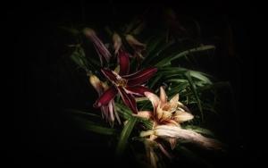 Jardín Botánico de Ginebra… Lirio de día DigitaldeJavier Lopez  Compra arte en Flecha.es