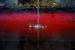 Tras el Cristal I | Fotografía de Ana Sanz Llorens | Compra arte en Flecha.es