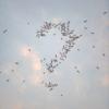 Okunishi Masaru | Fotografía de Leticia Felgueroso | Compra arte en Flecha.es
