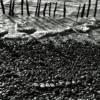 Guadalquivir ( paciencia) | Fotografía de Encarna Marín | Compra arte en Flecha.es