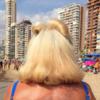 #204 ESCENAS DE LA VIDA RADIOACTIVA | Digital de María Moldes | Compra arte en Flecha.es