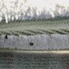 Invierno en los arados | Fotografía de Verónica Bustamante Loring | Compra arte en Flecha.es