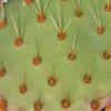 Verde abotonado | Fotografía de Verónica Bustamante Loring | Compra arte en Flecha.es