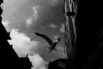 La Maleta de Ulises #4   Fotografía de José M. Feito   Compra arte en Flecha.es