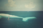Whiteness of the whale | Collage de Brunella Fratini | Compra arte en Flecha.es