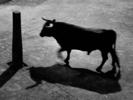 Sombras de mi memoria #22 | Fotografía de César Ordóñez | Compra arte en Flecha.es