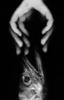"""escanografía """" PESCA""""   Digital de Carlota Lobo   Compra arte en Flecha.es"""